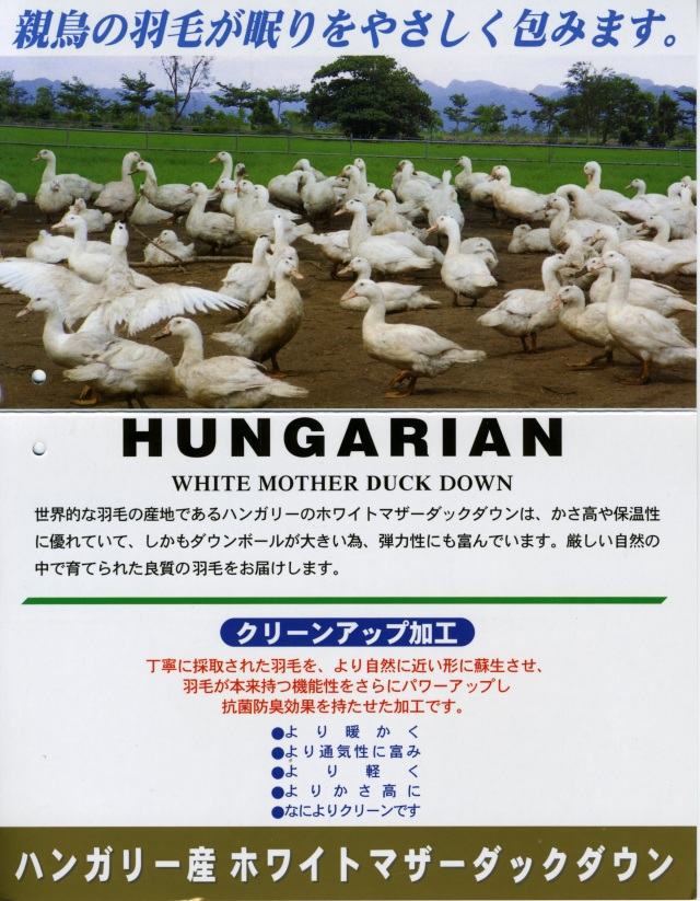 ハンガリーモスコビーダウン