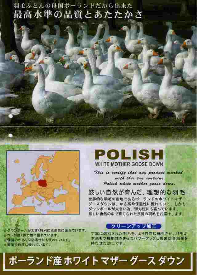 ポーランド産ホワイトマザーグースダウン93%